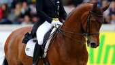 Maltrattò il cavallo fino alla morte: radiato atleta olimpico