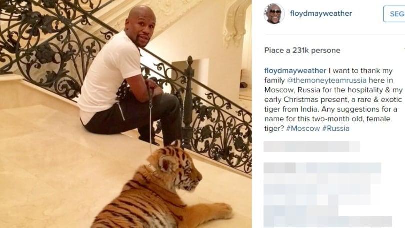 Mayweather si regala una tigre per Natale