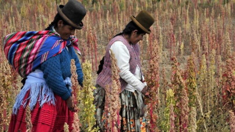 La quinoa, il supercibo che ha conquistato anche l'Italia