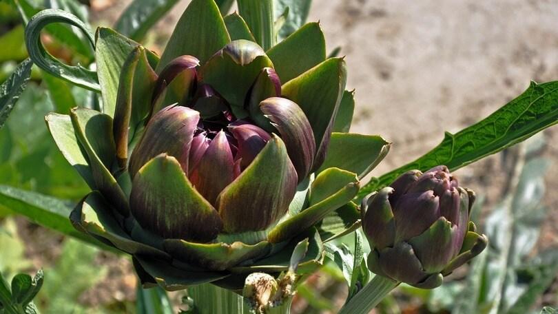 Fuori porta: le sagre nel Lazio ad aprile