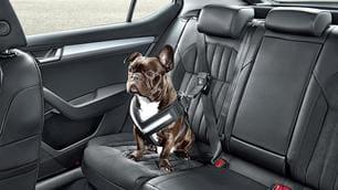 Skoda accessori per trasporto cani