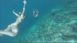 Federica Pellegrini, vacanza da sogno: la Divina nuota con le tartarughe