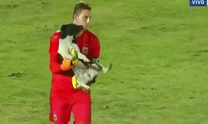 """Il cane invade il campo e il portiere lo """"para"""""""