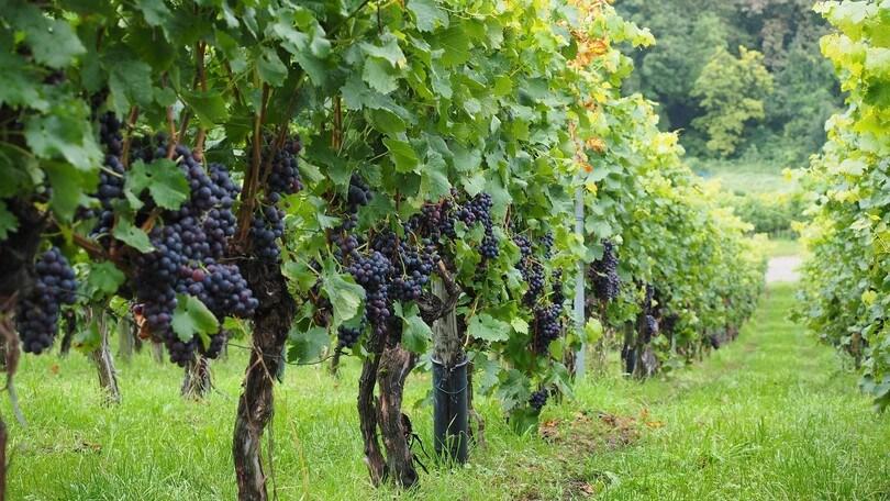 Passeggiando per le strade dei vini laziali