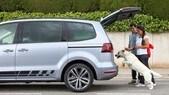 Vacanze col cane in auto? 11 consigli per viaggiare tranquilli