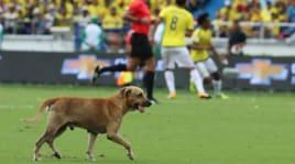 Colombia-Brasile, l'invasione di campo del cane è un assist a Neymar