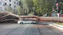 Un albero crolla su tre auto in centro a Roma