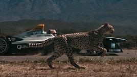 Formula E, la monoposto elettrica sfida il ghepardo