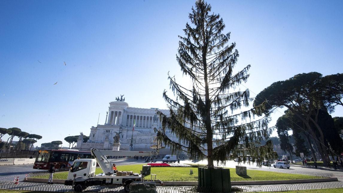 Spennacchio albero roma