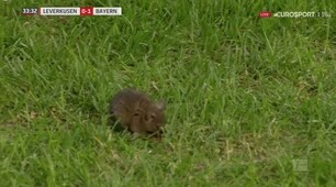 Il protagonista di Bayer-Bayern? E' un topo...
