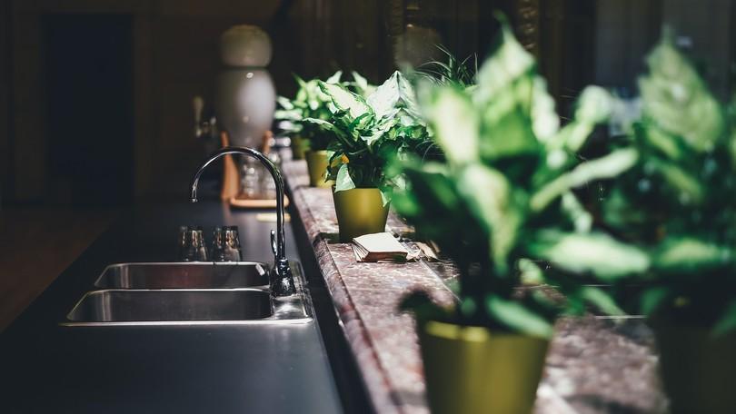 Pothos: la pianta che ci fa bene