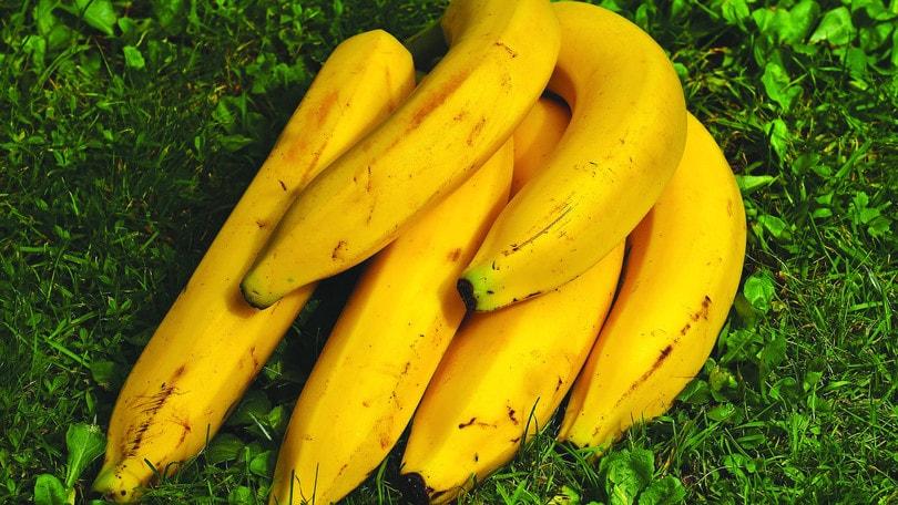 Dal Giappone una banana tutta speciale