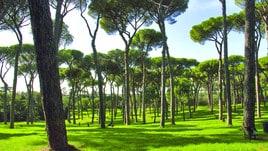 Ecco il Giardino dei Giusti di Roma
