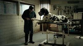 Dogman, la recensione del film di Matteo Garrone