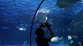 Rosolino al Gardaland Sea Life Aquarium
