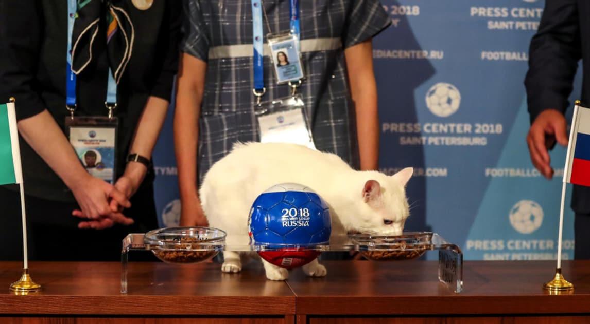 Primo verdetto del gatto che predirrà i risultati del Mondiale: Arabia Saudita sconfitta...ai croccantini