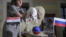 Russia-Egitto: il gatto Achille ha scelto...