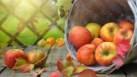 Una mela per la ricerca: AISM torna in 5mila piazze italiane