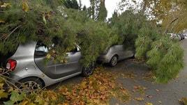 Maltempo: strage di alberi a Roma
