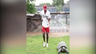 Pogba sfida in velocità...una tartaruga!