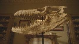 Dinosaurs: una clip dal documentario Magnitudo