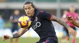 Serie A Sampdoria-Bologna, formazioni ufficiali e diretta dalle 20.30. Dove vederla in tv
