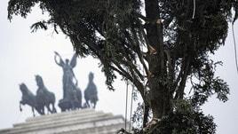 Natale, torna Spelacchio a Roma ma c'è un problema con i rami
