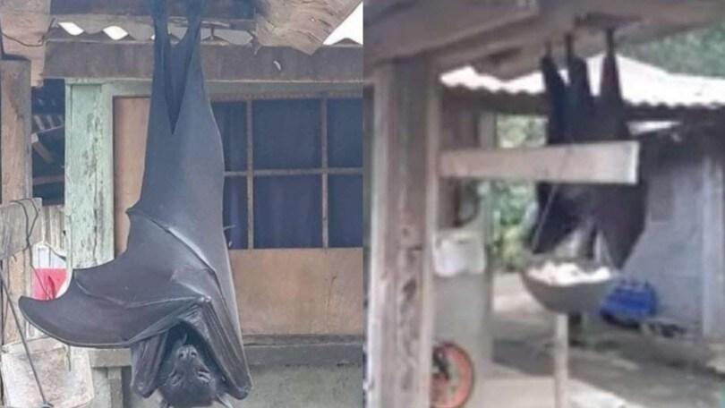 La foto del pipistrello gigante che ha fatto il giro del web