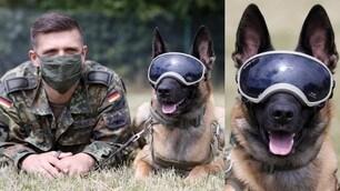 I cani anti Coronavirus: addestramento con la maschera
