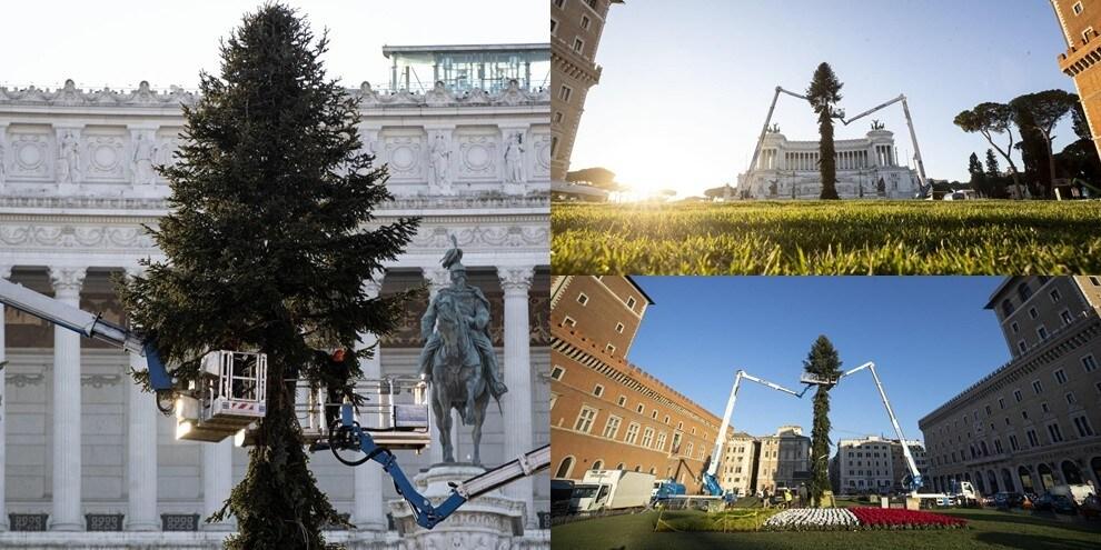 Roma si prepara al Natale: a piazza Venezia torna Spelacchio