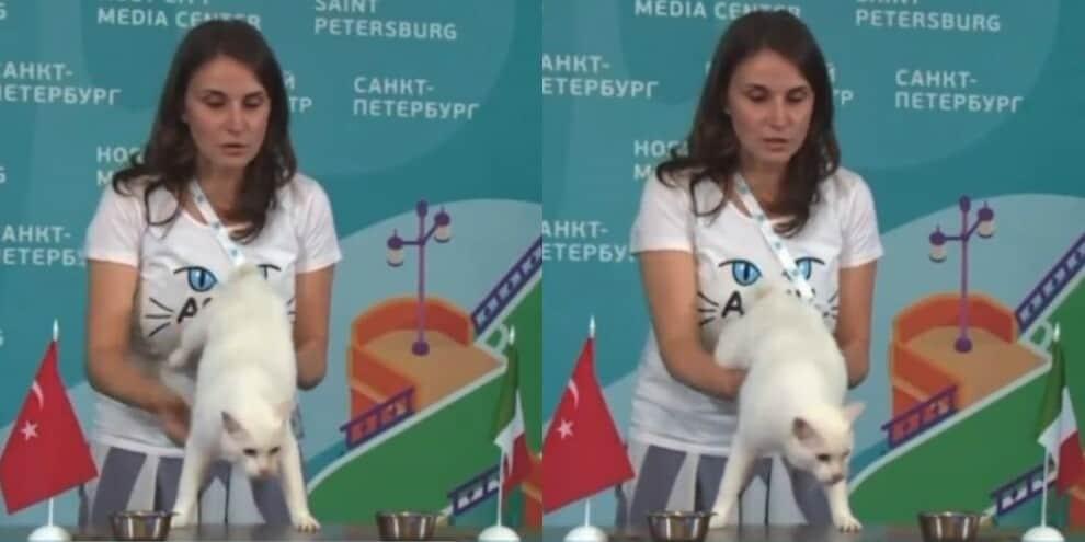 Altro che polpo Paul: Achille il gatto e il pronostico di Italia-Turchia