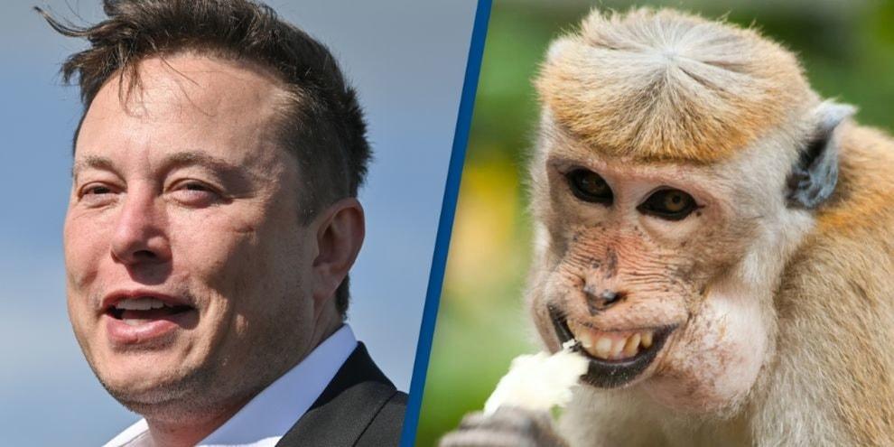 """Elon Musk, chip nel cervello di una scimmia: """"Ecco cosa farà ora"""""""